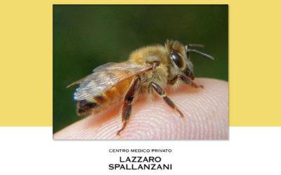 Allergie agli imenotteri : come proteggersi dalle punture di insetti